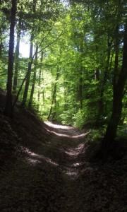 Promenade Kintzheim 3
